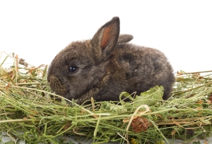 small rabbit sitting in hay